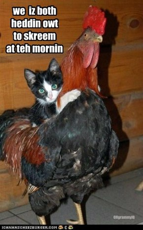 we  iz both heddin owt to skreem at teh mornin
