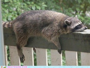 Monorail Coon is Entering the Station