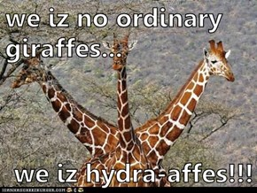 we iz no ordinary giraffes...  we iz hydra-affes!!!