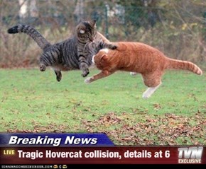 Breaking News - Tragic Hovercat collision, details at 6