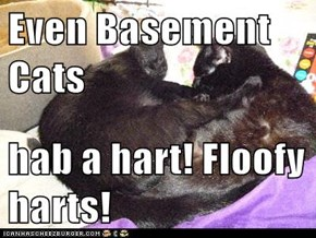 Even Basement Cats   hab a hart! Floofy harts!
