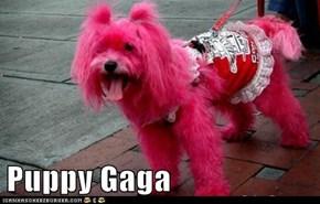 Puppy Gaga