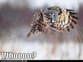 Whoooo?