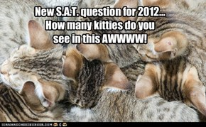 New S.A.T. question for 2012... How many kitties do you see in this AWWWW!