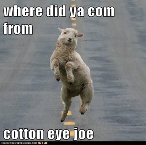 where did ya com from  cotton eye joe