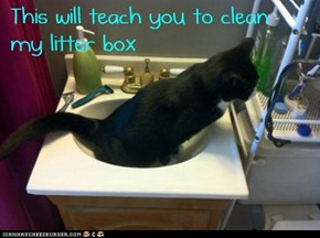 You didn't clean my litter box