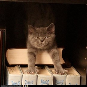 Cyoot Kittehs of teh Day: Curl Up With a Good Book