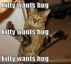 kitty wants hug kitty wants hug kitty wants hug