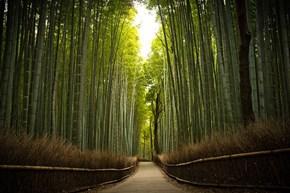 Bamboo Forest, Tenryuu-ji Temple, Kyoto