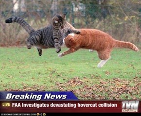Breaking News - FAA Investigates devastating hovercat collision