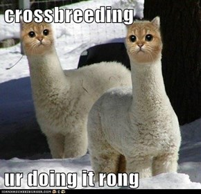 crossbreeding  ur doing it rong