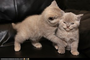 Cyoot Kittehs of teh Day: I Reject Your Love!