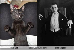 This Cat Totally Looks Like Bela Lugosi
