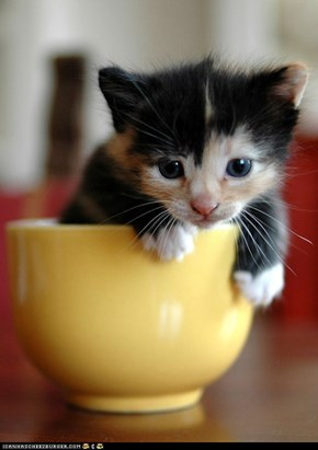 Cyoot Kitteh of teh Day: Cup of Cute