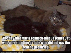 The day that Mavis realized that Basemet Cat was a freeloading a**hole who did not pay the rent he promised.