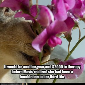 It would be another year and $2000 in therapy before Mavis realized she had been a bumblebee in her third life.