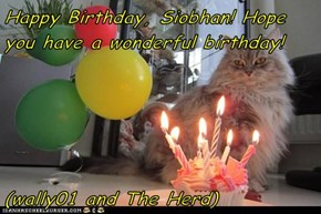 Happy Birthday, Siobhan! Hope you have a wonderful birthday!   (wally01 and The Herd)
