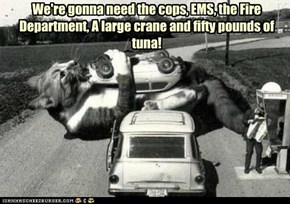 We're gonna need the cops, EMS, the Fire Department, A large crane and fifty pounds of tuna!