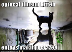 optecal illusun kitteh  enjoys makin u crazee