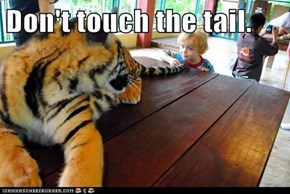 Don't touch the tail.