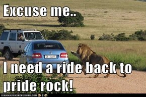 Excuse me..  I need a ride back to pride rock!