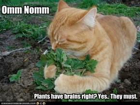 Vegan Zombie Cat