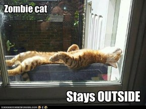 Zombie cat, stays outside.