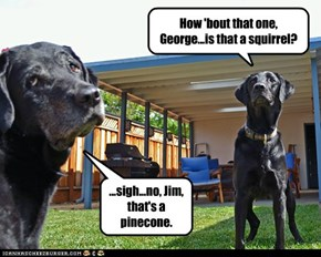 How 'bout that one, George...is that a squirrel?