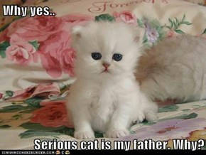 Why yes..  Serious cat is my father. Why?
