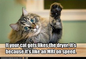 If your cat gets likes the dryer, it's because it's like an MRI on speed.
