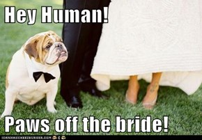 Hey Human!  Paws off the bride!