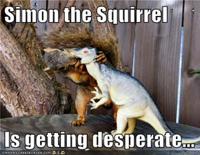 Simon the Squirrel  Is getting desperate...
