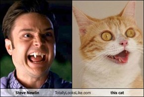 Steve Newlin Totally Looks Like this cat