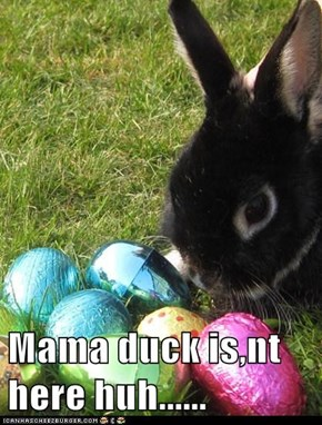 Mama duck is,nt here huh......