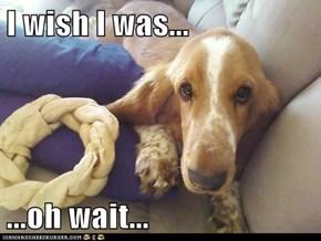 I wish I was...  ...oh wait...