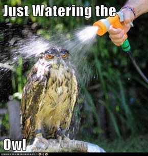Just Watering the  Owl