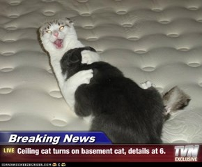 Breaking News - Ceiling cat turns on basement cat, details at 6.