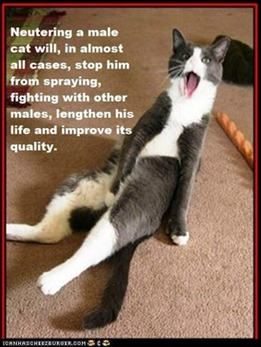 Fun Cat Facts #75