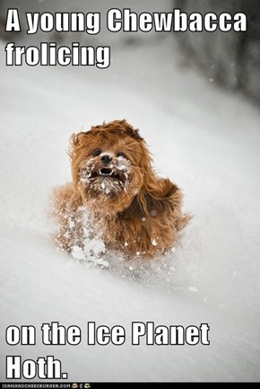 A young Chewbacca frolicing  on the Ice Planet Hoth.