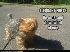 ELEPHANT FARTS. Never stand downwind of one