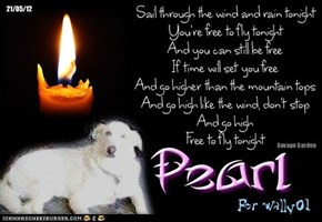 A Monday Night Candle For Our FurFriends At The Bridge