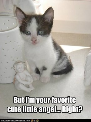 Yes, kitteh.  You are my favorite