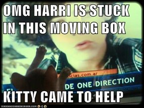 OMG HARRI IS STUCK IN THIS MOVING BOX  KITTY CAME TO HELP