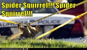 Spider Squirrel!!! Spider Squirrel!!!