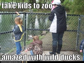 take kids to zoo  amazed with wild ducks