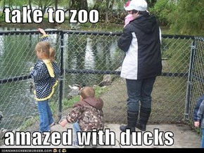 take to zoo  amazed with ducks