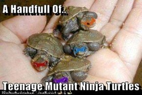 A Handfull Of..  Teenage Mutant Ninja Turtles