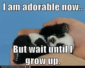 I am adorable now..  But wait until I grow up.