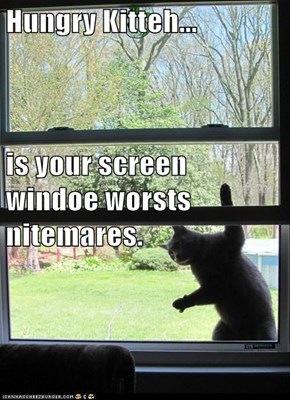 Hungry Kitteh... is your screen windoe worsts nitemares.