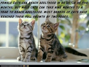 Fun Cat Facts #79